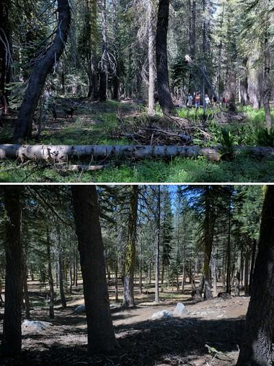 forestrestoration