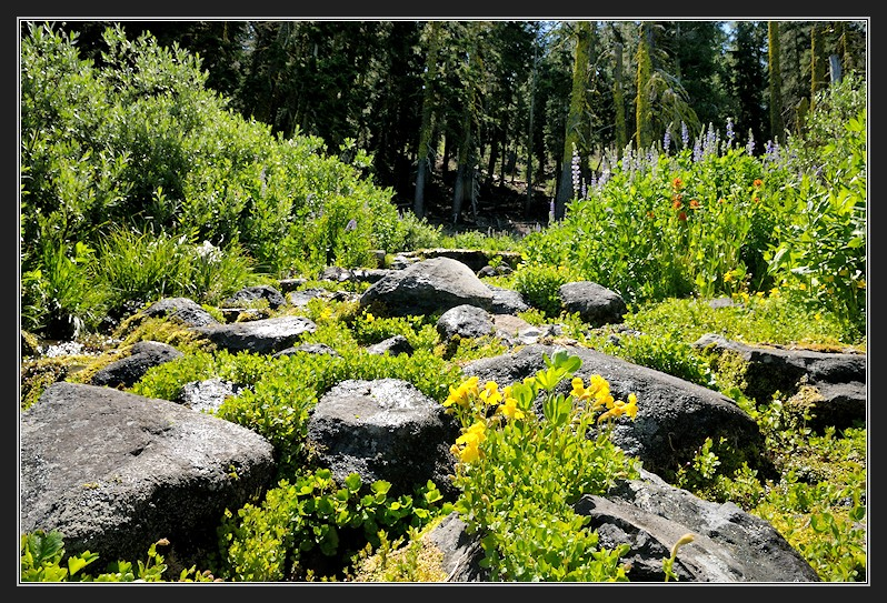 Outflow of Yuba headwaters at Sugar Bowl-06 7-3-13