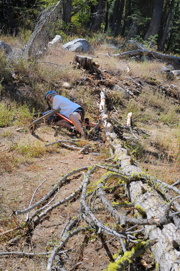 LC after tree fell on her bike on Killys Cruise in Royal Gorge area-06 9-6-13