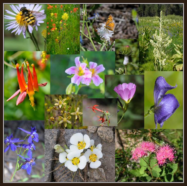 wildflower_collage