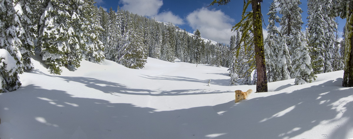 Snowy Tiny Tim meadow in Royal Gorge area of Donner Summit